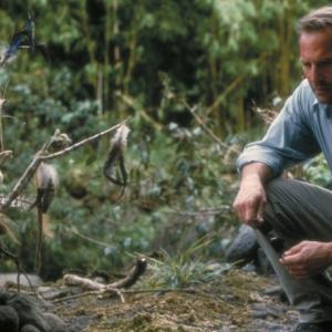 Kevin Costner en el film Dragonfly